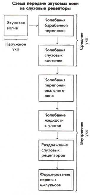 Схема передачи звуковых волн