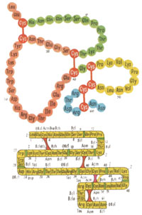 Структура белка